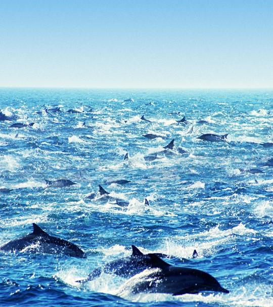 mega-pod-dolphins-2